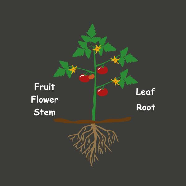 MUUW_Plant_Diagram